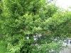 arbres04