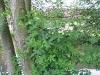arbres07