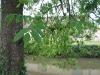 arbres09