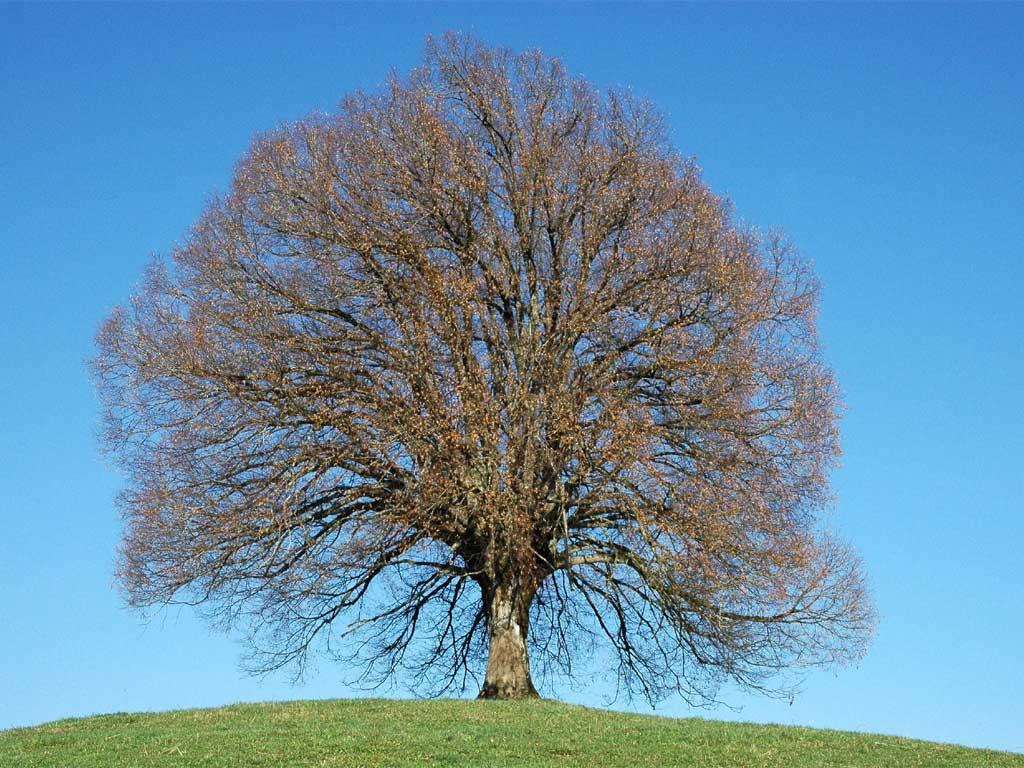 3-arbre-printemps