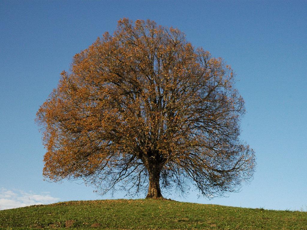 5-arbre-automne1