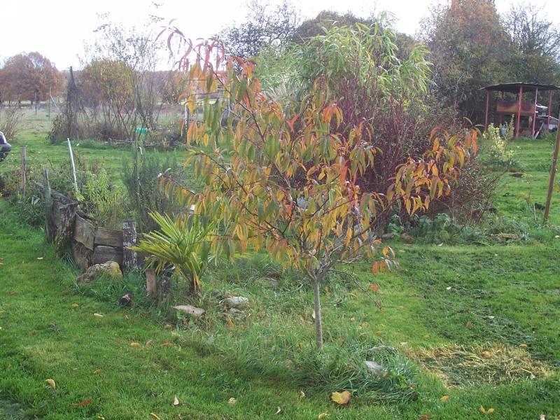 arbre-loman-001-8001