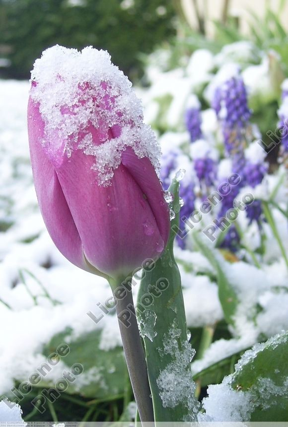 fleurs-flowers33