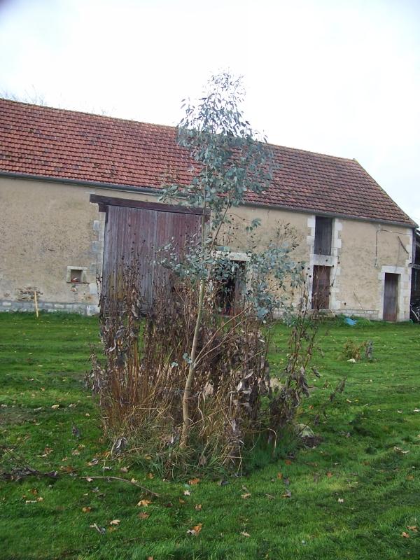 arbre-loman-003-800