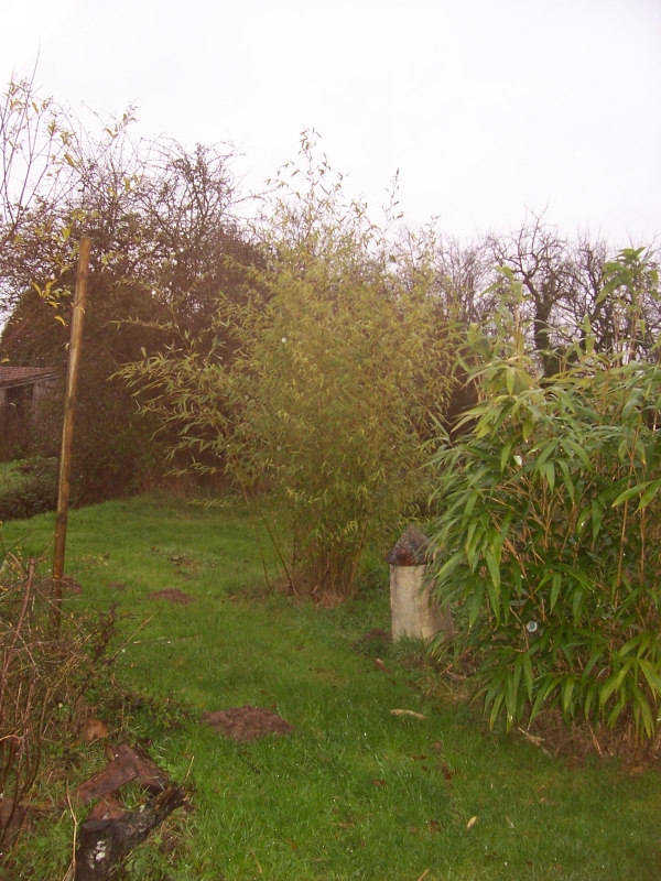 arbre-loman-005-800