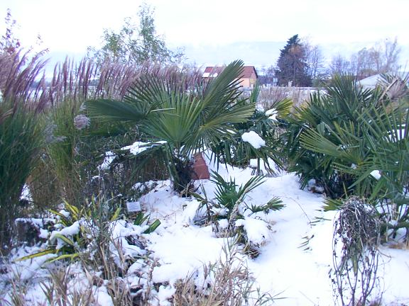 palmiers_massif