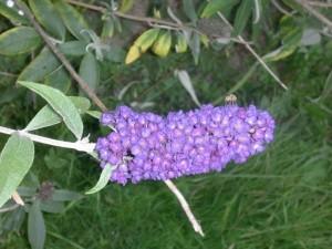 septembre-arbre-a-papillon_redimensionner3