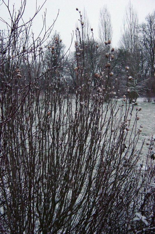 altea-hiver
